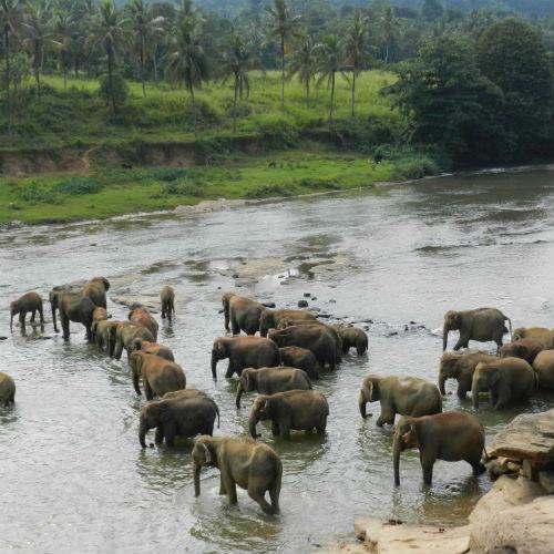 Olifanten in het water portfolio Seriously design