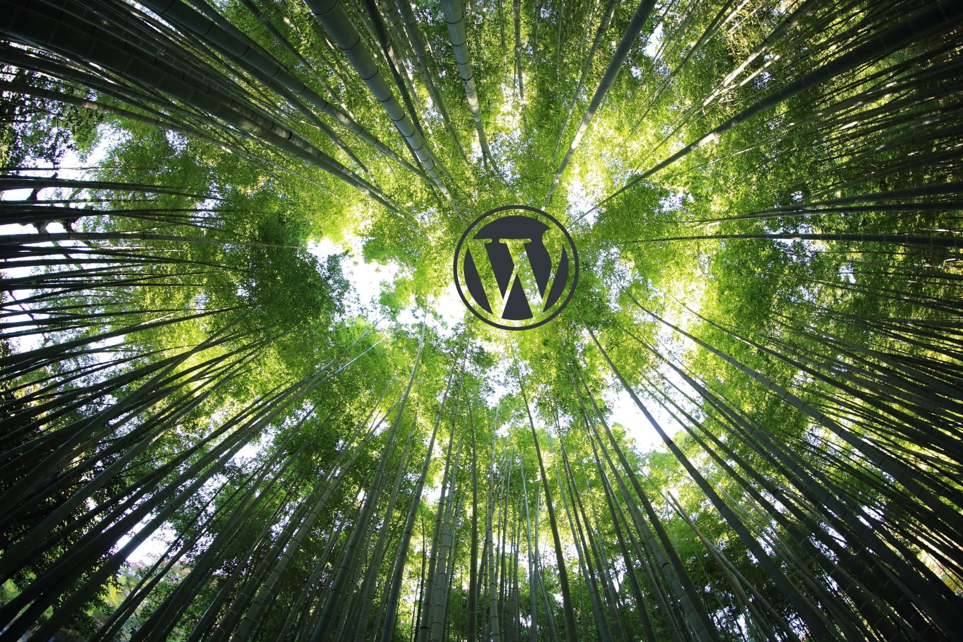 Zie jij door de bomen het bos niet meer, in het woud dat WordPress heet? Laat mij jou helpen. Schrijf je in voor mijn WordPress cursus.
